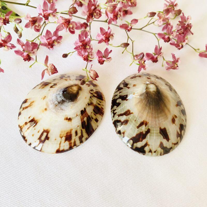 Coquillages d'allaitement baby Shell Paire